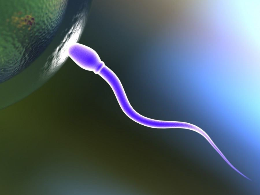 male fertility acupuncture